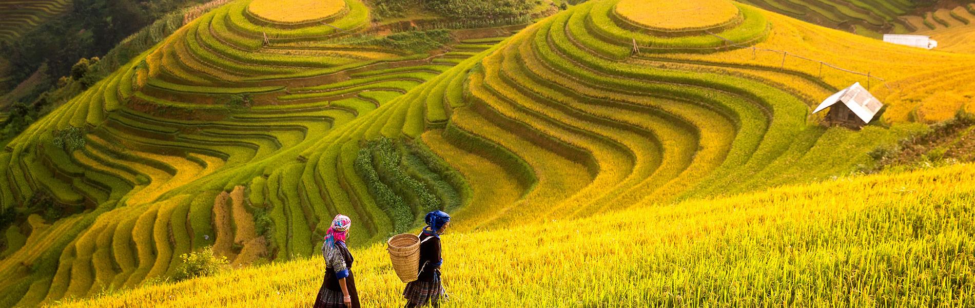 Vietnam Terrace Fields