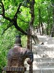 elephant & steps