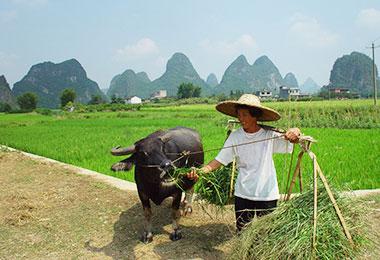 Yangshuo rural scenery