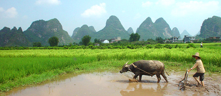 Experience a rural life in Yangshuo