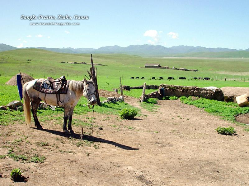 Sangke Grassland, Xiahe, Gansu