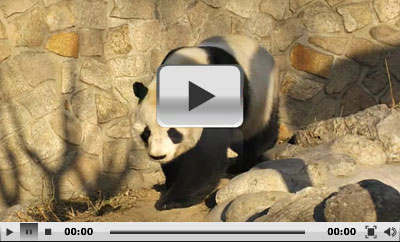 Beijing Zoo Panda House Prices And Address