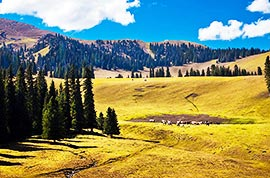 Pasture in Xinjiang