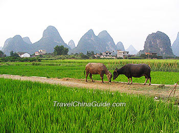Yangshuo rural scenery