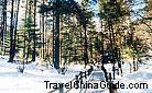 Yunshan Plateau is a large grassland hidden in the original spruce forest, Lijiang.