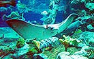 Look at this creature! In the Ocean Park, you will see many kinds of sea creatures like this.
