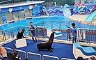 Dolphin Show of Hong Kong Ocean Park