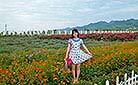 Lavender Manor in Zhouzhi, Xi'an