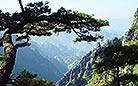 The overstretched pine tree is like a man stretching his arms for relaxation.