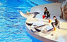 Lovely dolphins are true stars in the Ocean Park.