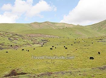 Hoh Xil Natural Reserve