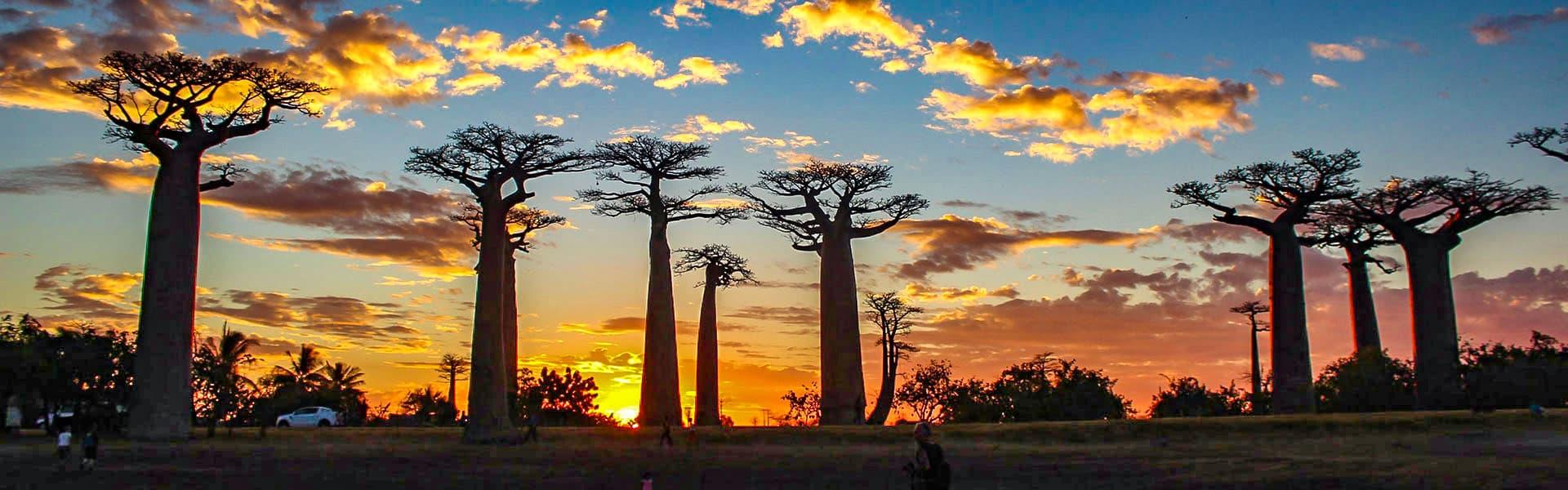 Baobabs Avenue, Madagascar