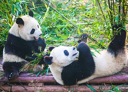 Jiuzhaigou paradise