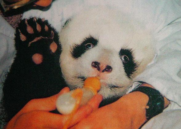 3-Month Baby Panda