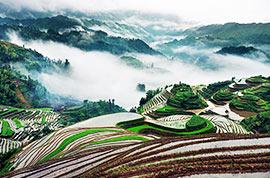 Longji Rice Terraced Fields